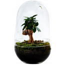 Growing Concepts DIY Sustainable Ecosystem Egg Lar
