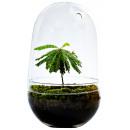wholesale Crockery: Growing Concepts DIY Sustainable Ecosystem Egg Lar