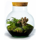 wholesale Crockery: Growing Concepts DIY Sustainable Ecosystem Sphere