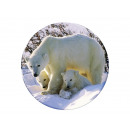Photo magnet polar bear, Ø 3.5cm