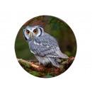 Photo magnet owl, Ø 3.5cm