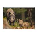 Photo magnet wild boar 5.5x8cm