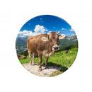 Photo magnet cow on pasture Ø 3.5cm