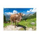 Photo magnet cow on pasture 5.5x8cm