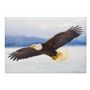 Photo magnet eagle, 5.5x8cm