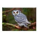 Photo magnet owl, 5.5x8cm
