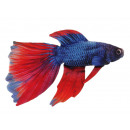 wholesale Sports & Leisure: Siamese fighting fish made of cloth, 52cm