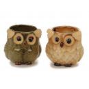wholesale Garden & DIY store: Owl plant pot made of porcelain 13 x 13 x 13 cm