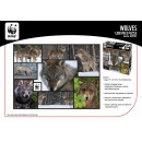 WWF 1000 puzzle wolves