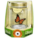 wholesale Business Equipment: Butterfly collection - in open carton