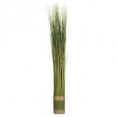 fagot d herbe h79xd8, vert