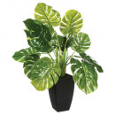 green plant h70, green
