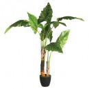 ingrosso Giardinaggio & Bricolage: albero di banane h120, verde