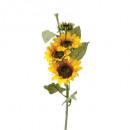 Sonnenblumenstamm h80, gelb