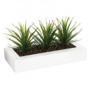 centre table aloe vera h17 x3, blanc