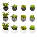 pianta adulte d6, 3- volte assortito