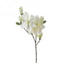 witte Magnolia steel h83, wit