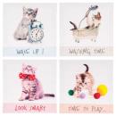 toile imprimée chat rigol 28x28x1.5, 4-fois assort