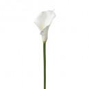 blanco arum tallo h75, blanco