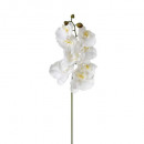 Orchid stem h108, 2- times assorted , multicolored