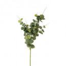 tallo de eucalipto h91, verde