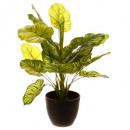 groene plant h45, 2 maal geassorteerd , groen