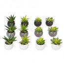 oily plant pot h13, 6- times assorted , multicolor