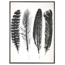 printed canvas / feather frame 60x80, multicolored