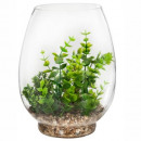 plant terrar vase glass h25 box, 3- times assorted