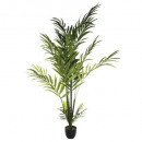 palm areca h230, black