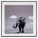 glass frame eleph 50x50, black & white