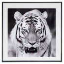 tiger glass frame 50x50, black & white