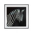 zebra glass frame 28x28, black & white