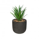 green plant etnik h20, 3- times assorted , black