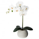 orchidee real touch cim h.53, gris