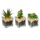 grossiste Plantes et pots: set kdo plante verte x3, transparent