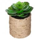 grossiste Plantes et pots: plante verte corde etnik h16, 3-fois assorti, sabl