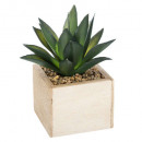chic green wood plant h14, 3- times assorted , san