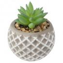 succulent cement pot d8xh9, 2- times assorted , gr