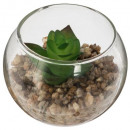 Display mini plant glass d6,5, 3- times assorted ,