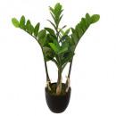 zamioculcas h60, green