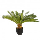 pineapple plant h72, green