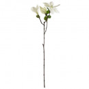 Magnolia 3 flowers h67, white