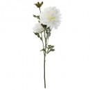 tige dahlia 3 fleurs h62, blanc