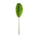 tallo de banano h117, verde
