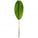 bananenstam h130, groen