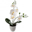 orchidee h43cm, 2-fois assorti, couleurs assorties