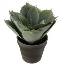 agave collect blue h25, green