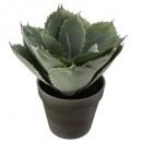 mayorista Herramientas y accesorios: agave recoger azul h25, verde