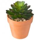 succulent terra living h12, 3- times assorted , gr